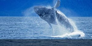 monterey-ca-whale-watching-top