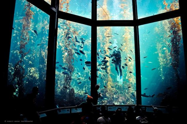 Don't Miss Monterey Bay Aquarium Ticket Promos for 2016 ...