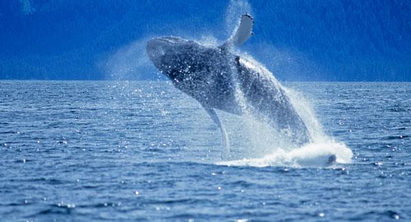 monterey-bay-whale-watch-at-california-th.jpg