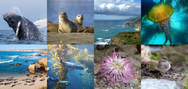 monterey-bay-national-marine-sanctuary.jpg